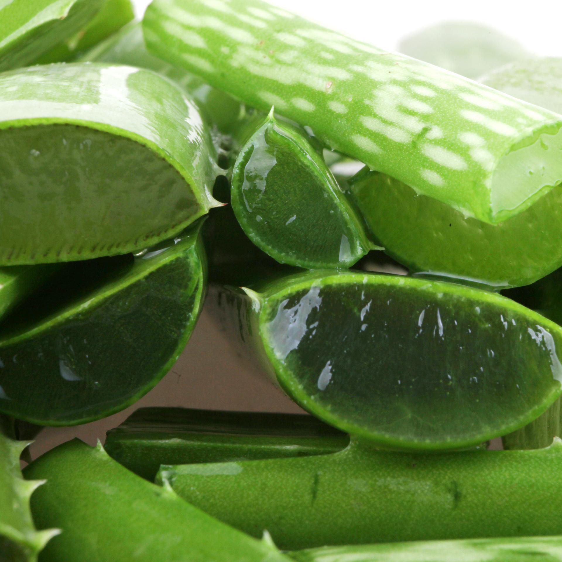 Aloe vera y sus propiedades vitacilina esencial - Cuidados del aloe vera ...